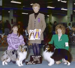 Eden with sire CH Shadow Hill's Rio Grande. WB,BOS for 4pts under S. DeFee