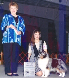 Best Of Opposite Sex at Durham KC, supported Sheltie Entry. Judge is  Katie Gammell.